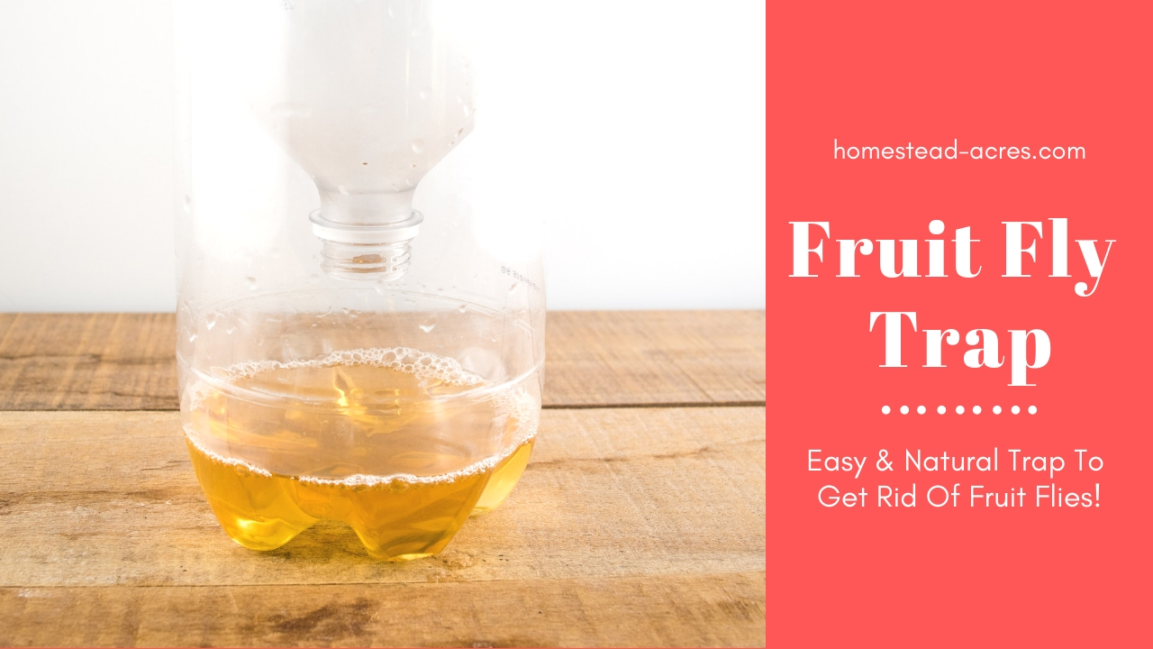 How To Make A Fruit Fly Trap (Get Rid Of Flies Fast