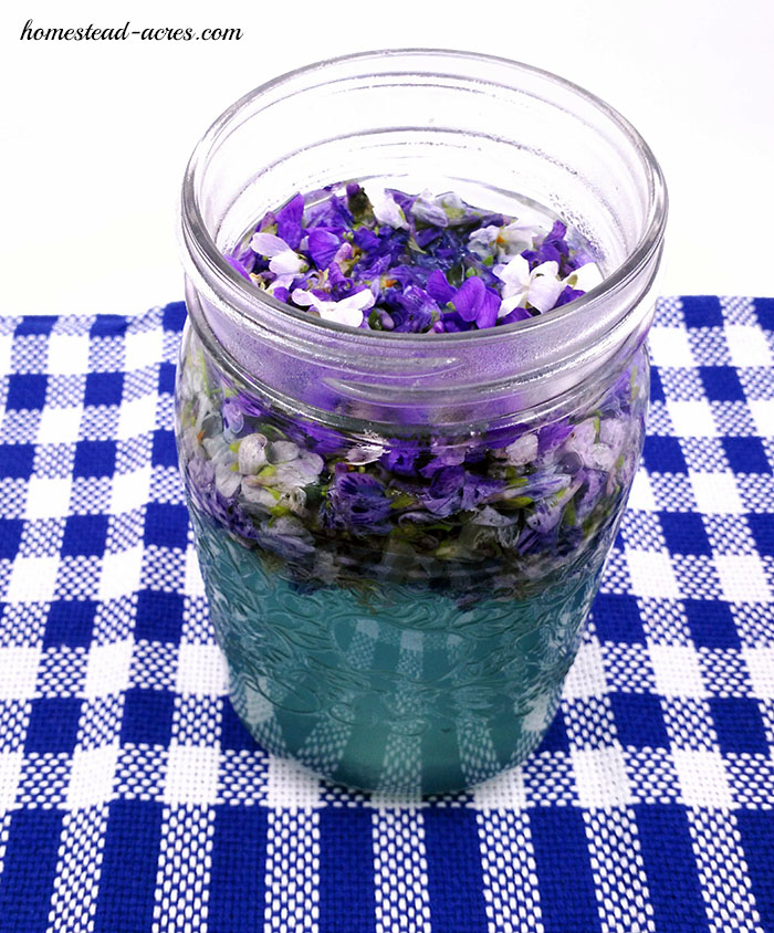 Violet flowers steeping to make tea to be used in making violet flower jelly recipe.