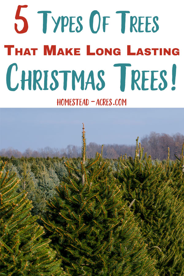 How To Make Your Christmas Tree Last Longer - Homestead Acres