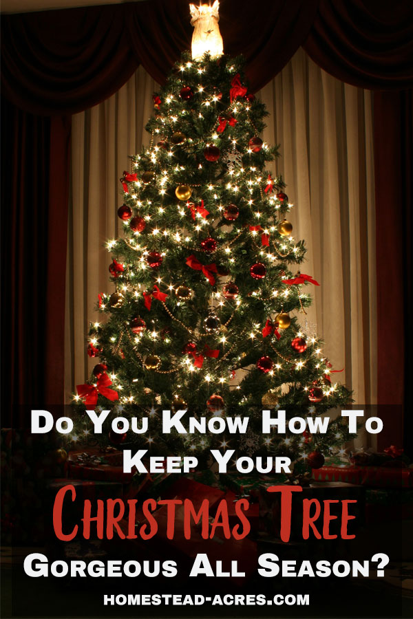 how to make your christmas tree last longer homestead acres. Black Bedroom Furniture Sets. Home Design Ideas