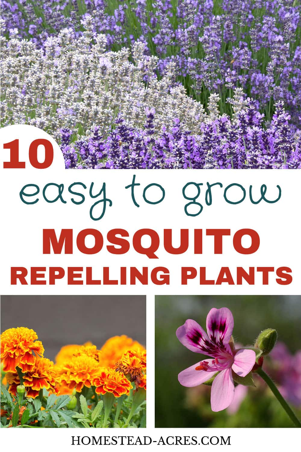 10 Plants That Repel Mosquitoes - Homestead Acres