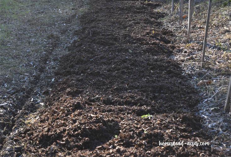 Fall Planted Potato Patch
