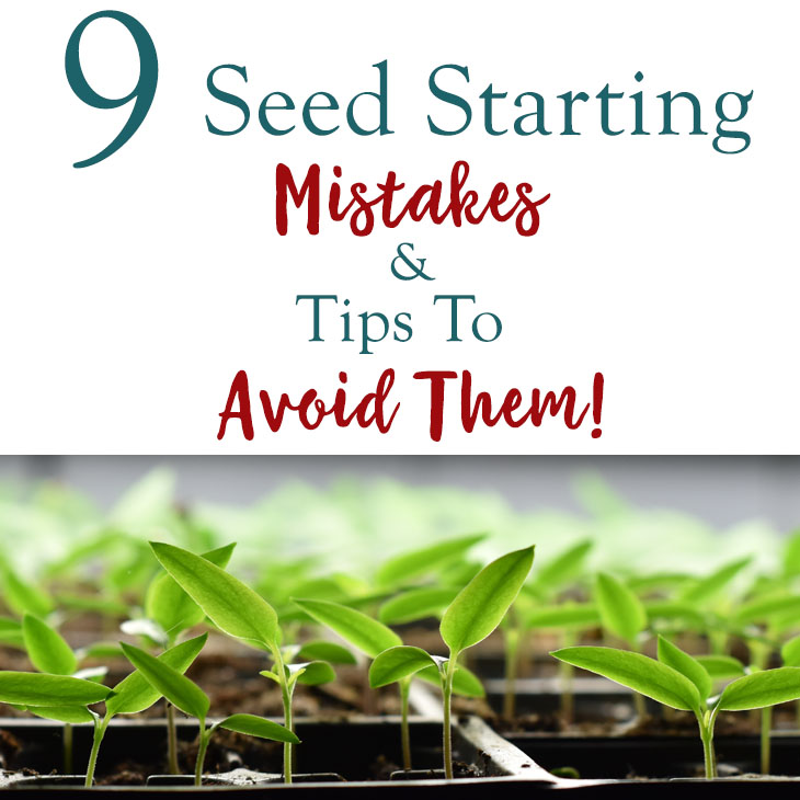 9 Indoor Seed Starting Mistakes Gardeners Make And Tips To Avoid Them