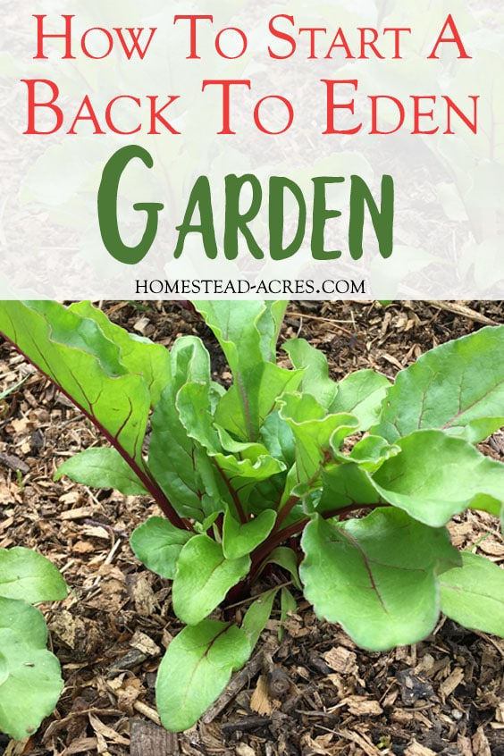 Back to Eden gardening has totally changed how we garden!! I love this method