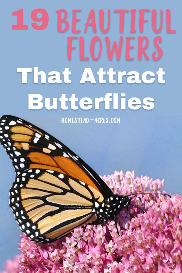 Beautiful flowers that attract butterflies to your garden.