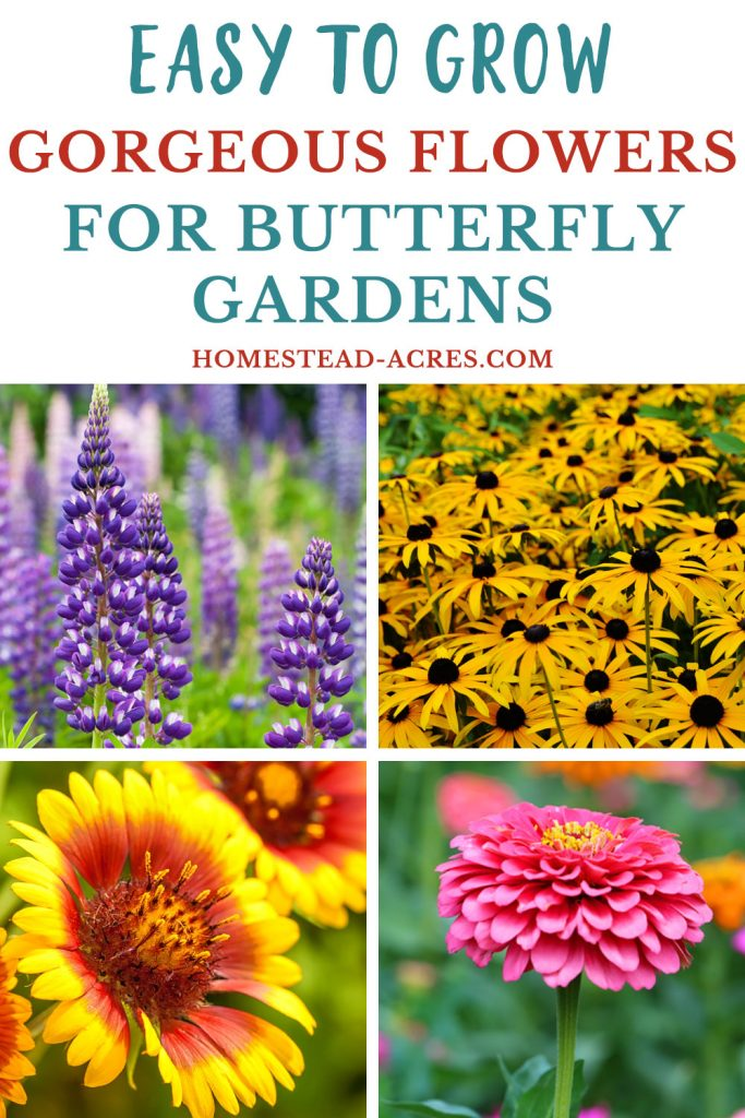 19 Best Flowers For Butterfly Gardens Homestead Acres