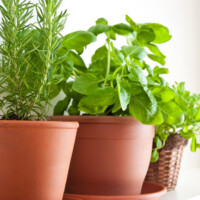 How To Start An Indoor Herb Garden (Even With Low Light)