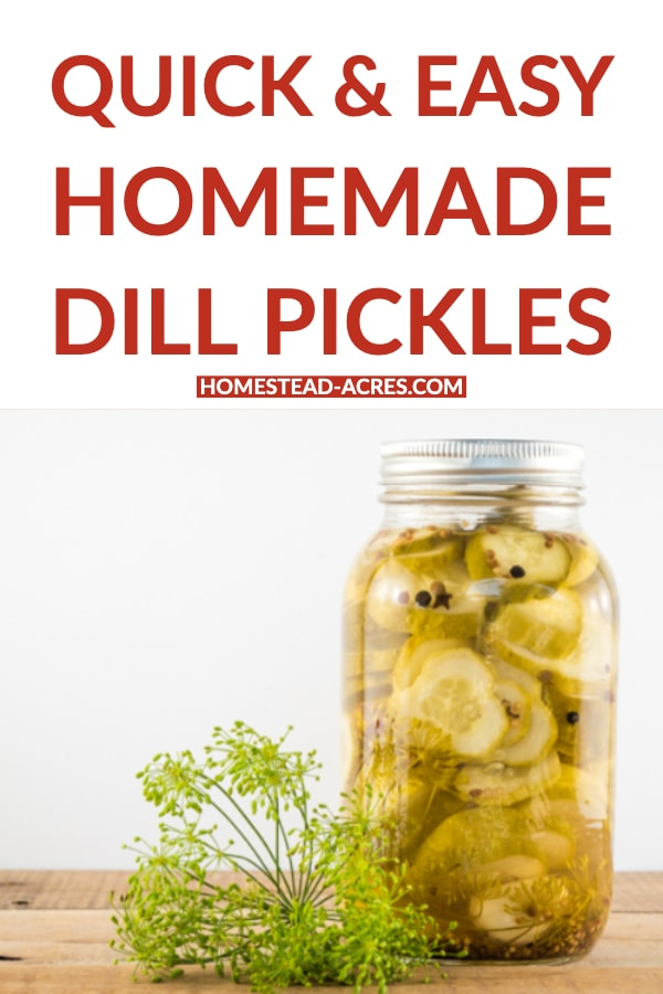 Quick and Easy Homemade Dill Pickles text overlaid on a photo of sliced round pickles in a canning jar.