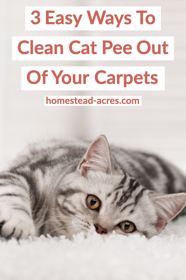 Cat Pee Smell Out Of Your Carpet