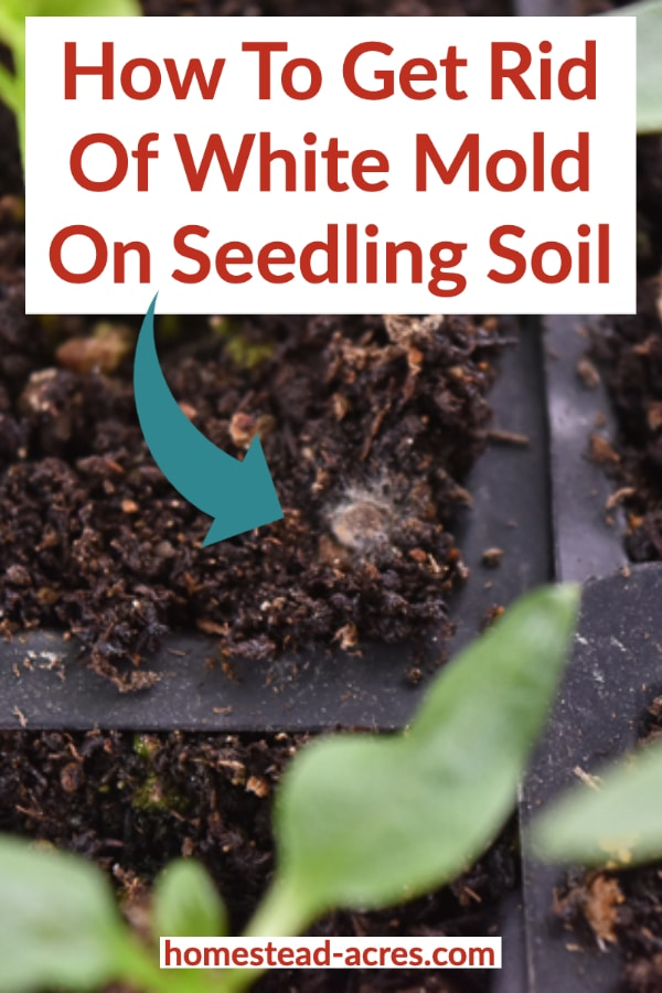 How To Get Rid Of White Mold On Seedling Soil text overlaid on a close up photo of white mold on soil.