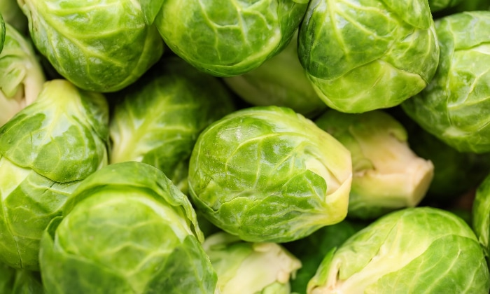 Freshly harvested Brussels sprouts.
