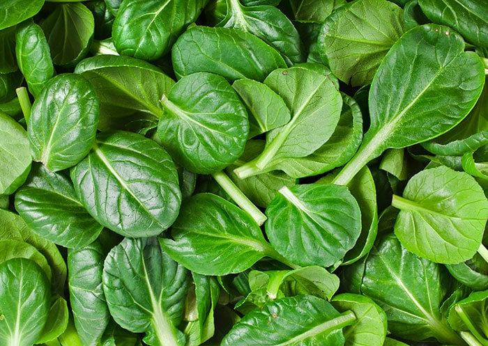 Baby bok choy leaves are a perfect substitute for spinach.
