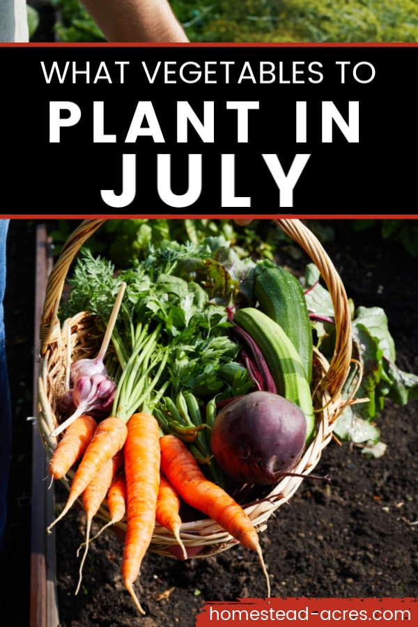What vegetables to plant in July text overlaid on a photo of fresh vegetables in a basket.