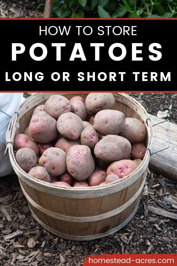 How to Store Potatoes Long Or Short Term text overlaid on a close up photo of red potatoes in a wooden bushel basket.